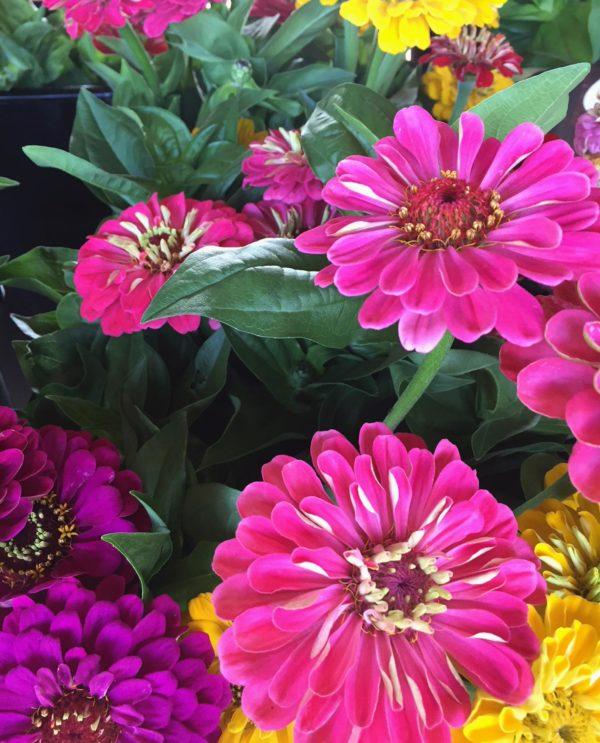flower share summer bouquet zinnias 2