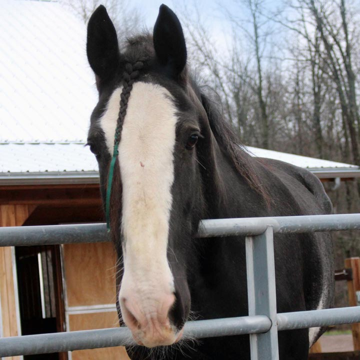 Pete the horse at Unity Farm
