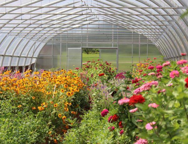 Unity Farm hoop house with flowers