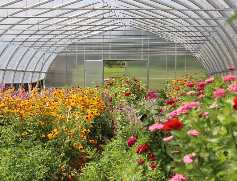 Unity Farm hoop house with flowers