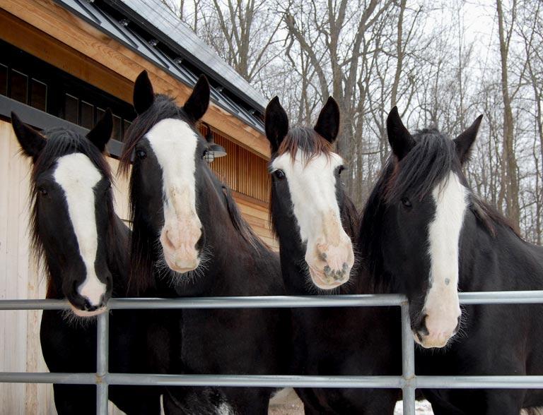 Unity Farm Horses